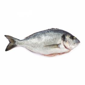 Guldsparid (Tsipoura) GREKISK 400-600g (Pris per kg)